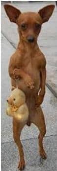 leyendas de yucatan La mestiza y la perra