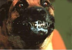 Leyenda del perro rabioso
