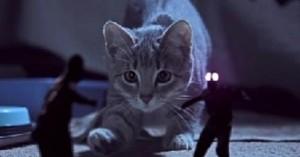 Cuento de terror El gato en la habitación