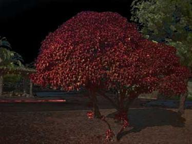 Historia de terror el árbol del vampiro
