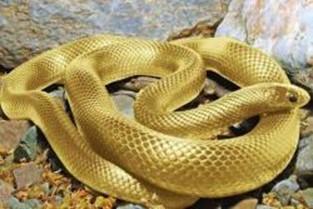 La Iracunda Serpiente de Catedral